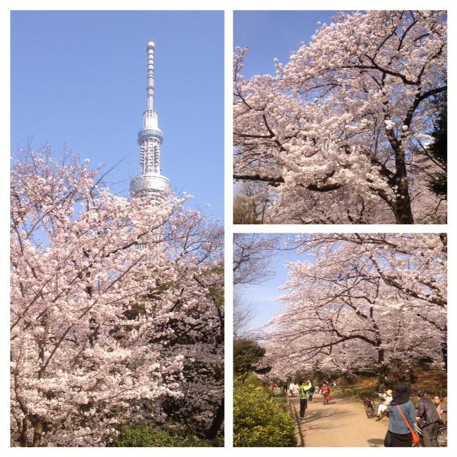 プチお江戸オフ 隅田川沿いの桜